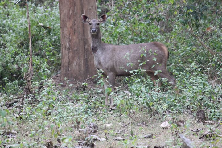 Nagarhole - A beautiful experience for everyone