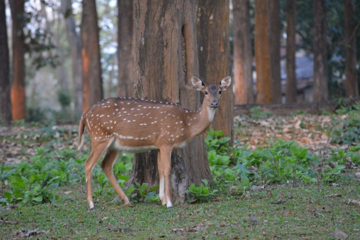 Nagarhole - A perfect santuary for the wildlife